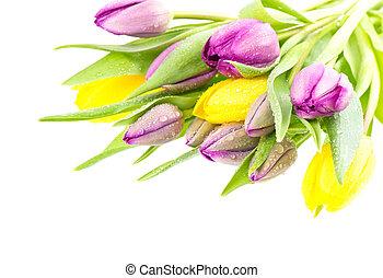 drops, букет, воды, тюльпан, свежий, цветы