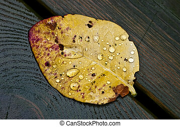 drops., chuva
