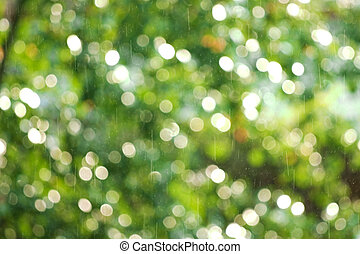 drops of a rain illuminated by a sunlight on a background of green foliage