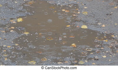 Drops of autumn rain in a puddle on the asphalt