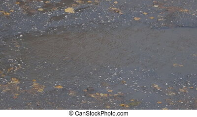 Drops of autumn rain in a puddle on the asphalt. In a puddle...