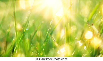 drops of dew on a green grass. timelapse.