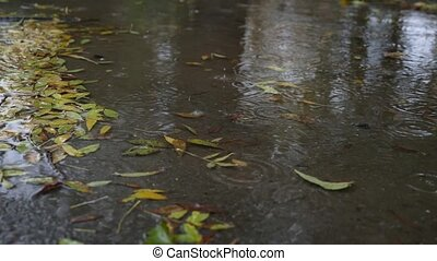 drops of fallen leaves in a puddle with fallen leaves. 4k, the delayed shooting.
