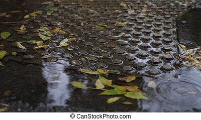 drops of fallen leaves in a puddle with fallen leaves. 4k,...