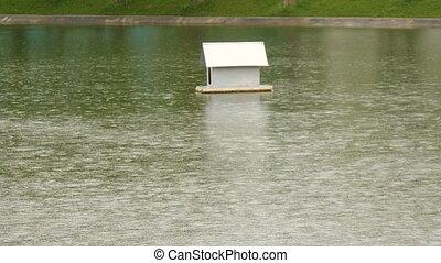 Drops of rain fall into the city pond.