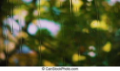 Drops of rain run down the glass, the branches of a tree with green leaves are swaying on a blurry background