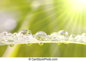 Drops of water after rain in the morning sun