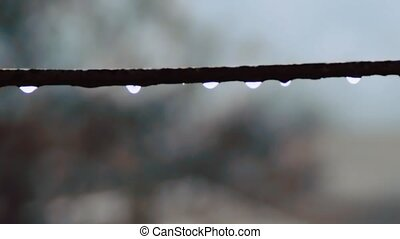 Drops of water dripping in the rain