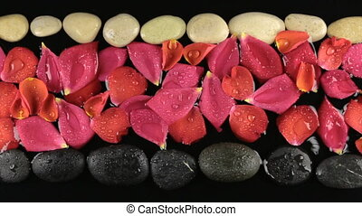 Drops of water falling on stones and rose petals.