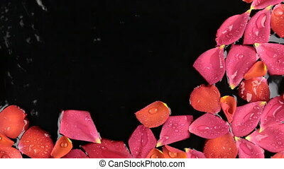 Drops of water falling on the rose petals floating in the water. Beautiful background.