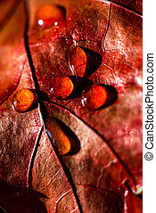 drops of water on a autumn red leaf of a plant