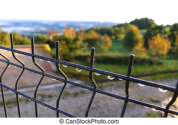 Drops of water on a fence in the early autumn morning.