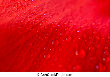 drops of water on the red flower petals