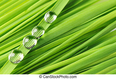Drops on a grass
