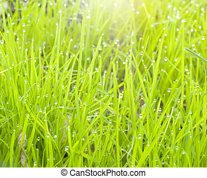 drops on a green grass