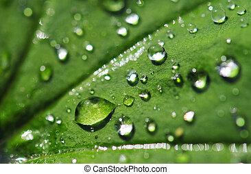 drops on a leaf - Rain drops on a leaf. Short depth of field...
