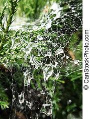 Drops on cobweb
