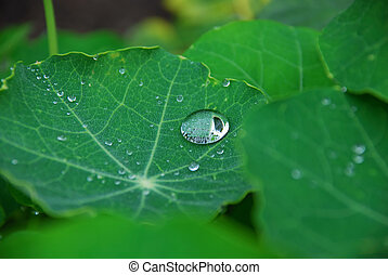 Thi is a drops on the green leaves