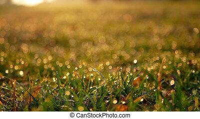 Drops rain grass ice - Pretty dew drops collected on a blade...