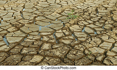 Drought cracked pond wetland, swamp very drying up the soil crust earth climate change, environmental disaster and earth cracks very, death for plants and animals, soil dry degradation marsh
