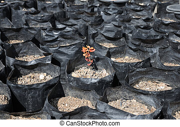 Drought soil in black plastic bags and one small plant