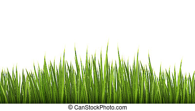 druh, grafické pozadí, s, nezkušený, grass., vector.