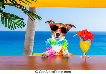 drunk dog - funny cool dog drinking cocktails at the bar in...