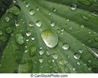 druppels, leaf.
