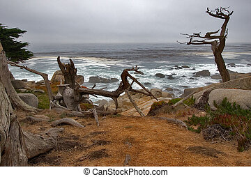 Pacific Ocean shore - Dry and green trees on a Pacific Ocean...