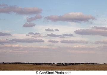 Dry arid landscape