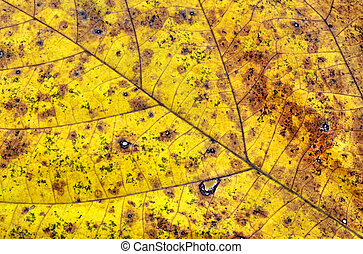 Dry autumn leaf background