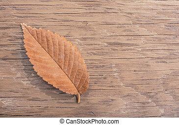 dry autumn leaf closeup