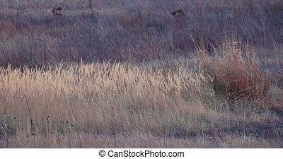 Dry autumn meadow breeze - Dry pale meadow with wild grass ...