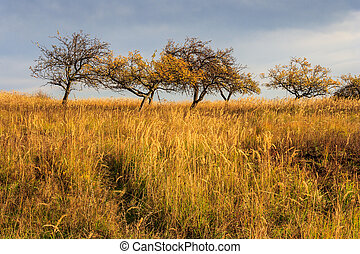 dry autumn trees and grass under a heavy gray sky - Fallen...
