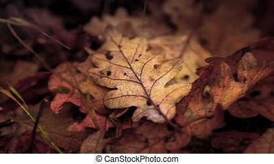 Dry autumnal leaf with dew animated footage