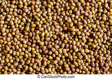Dry beans and peas