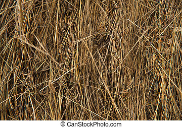 Dry bevelled hay close-up. The concept of winter food for farm animals