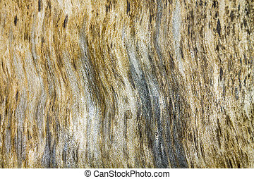 Dry birch texture