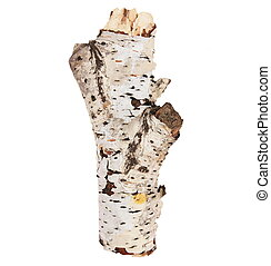 dry birch tree isolated on white