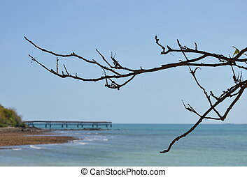 dry branch at the beach
