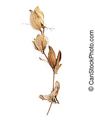 Dry branch with brown leaves in autumn