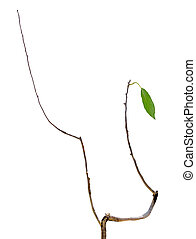 dry branch with leaf