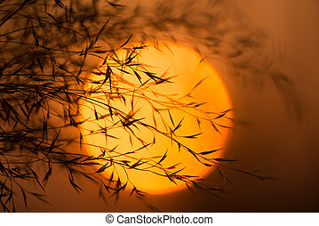 Dry branches against the evening sun. Branches of plants with leaves at sunset.