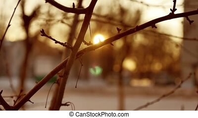 dry branches of a tree buds silhouette sunlight winter...
