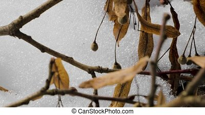 Dry branches of a tree with berries on a background of snow
