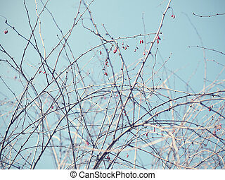 Dry branches of berberis on sky background in retro style