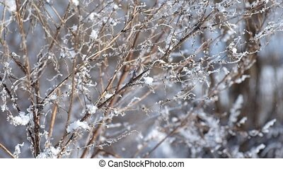Dry branches of field grass covered with frost and slightly moving from the wind
