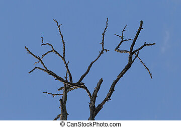 dry branches of tree against blue sky