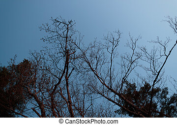 dry branches of trees against the sky