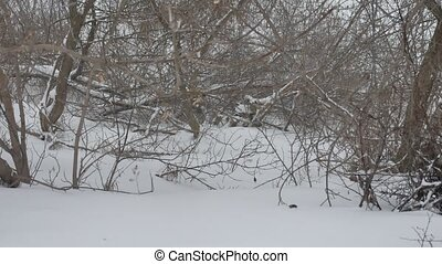dry branches of trees tops winter forest in Russia the nature outdoors landscape